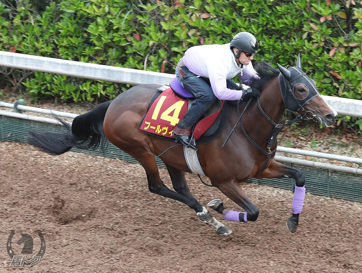 プールヴィルの馬体写真
