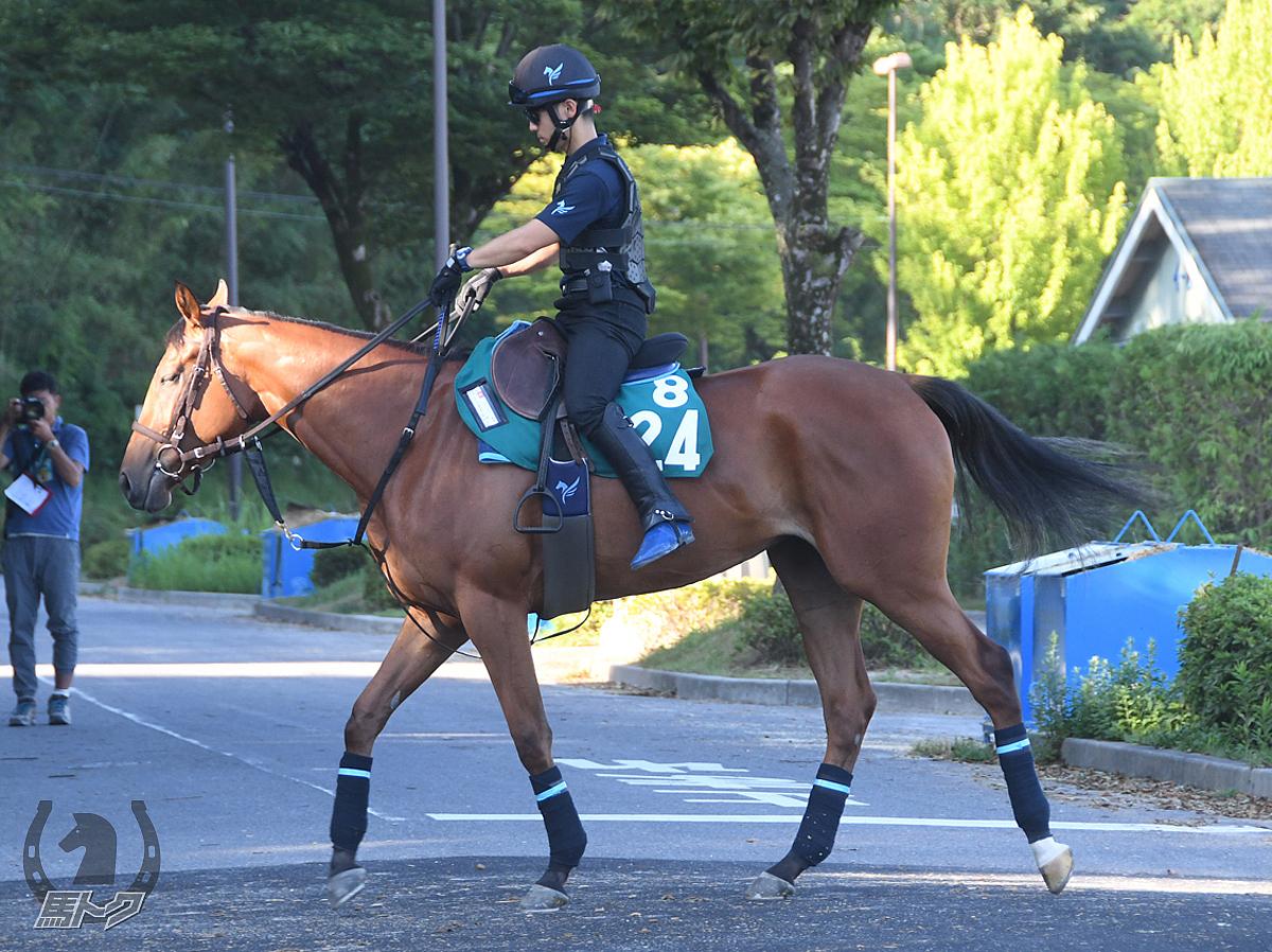 テンナイトパールの馬体写真