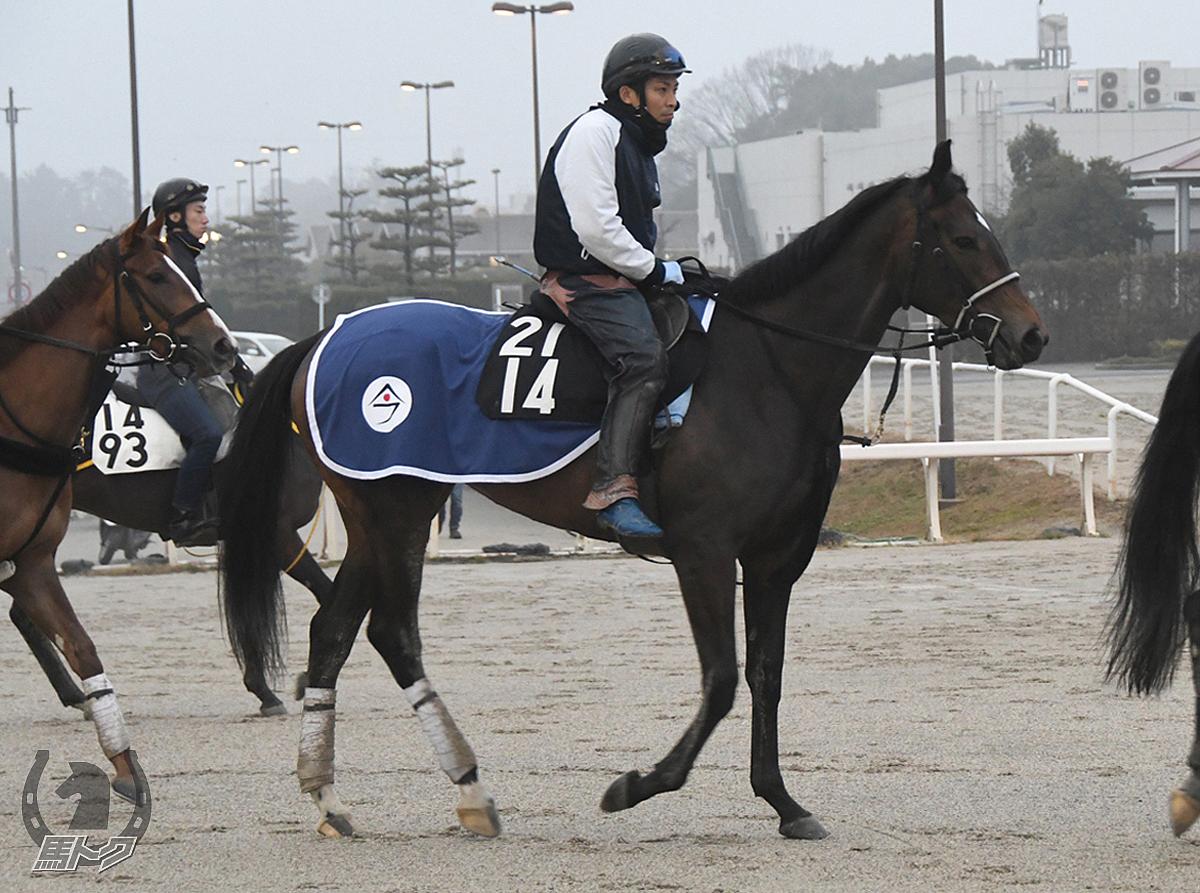 ヒダワールドの馬体写真