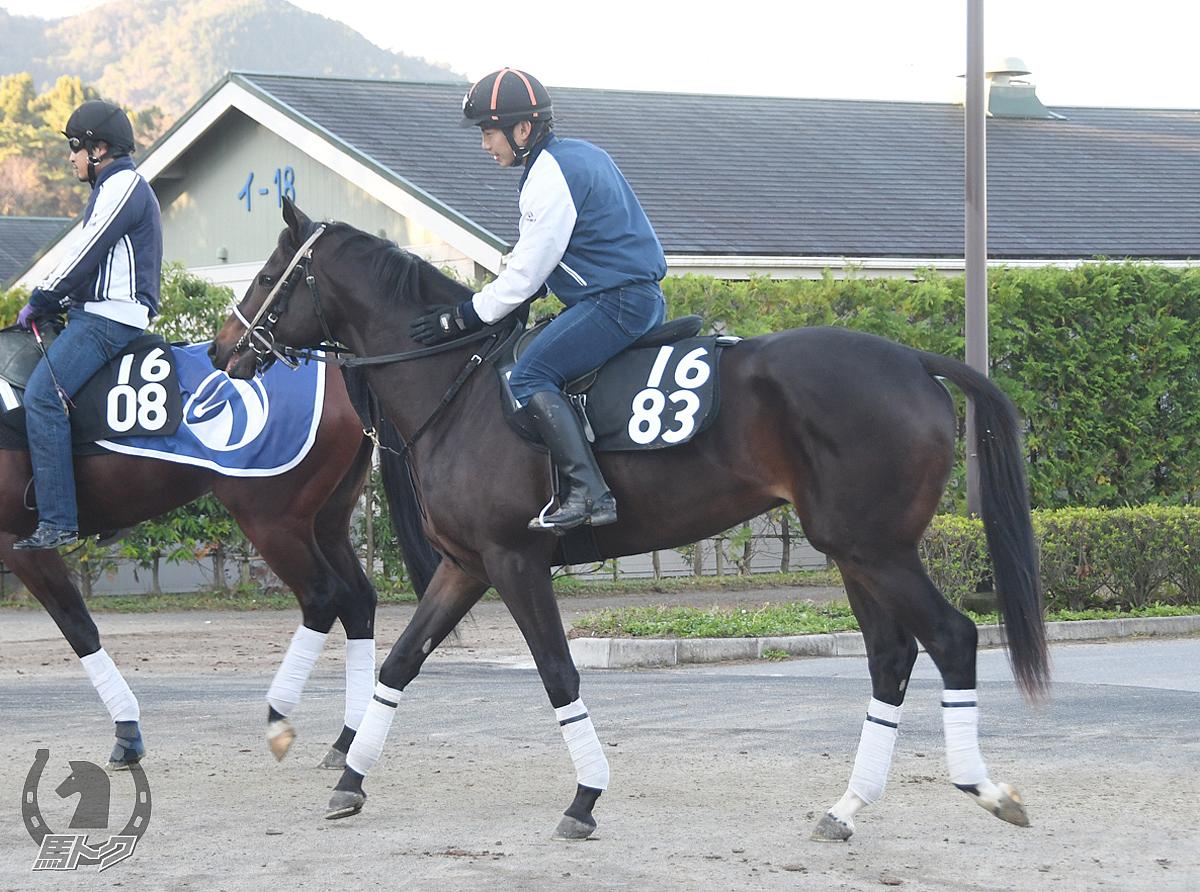 ブラックタートルの馬体写真
