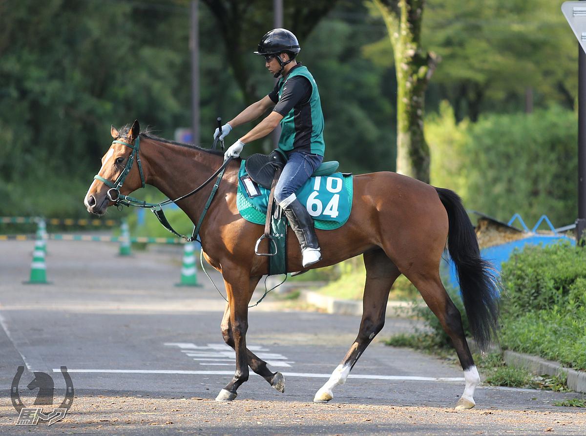 レガーロブロッサムの馬体写真