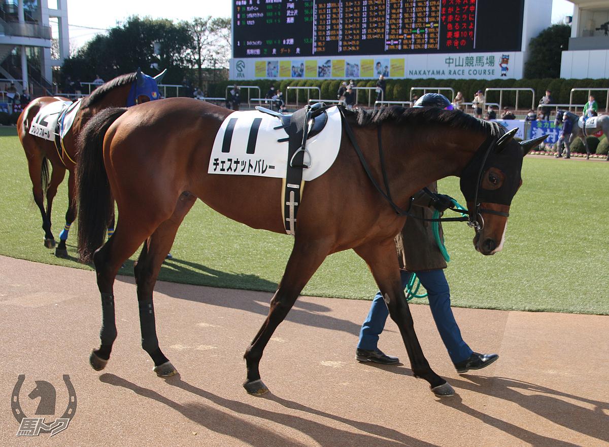 チェスナットバレーの馬体写真