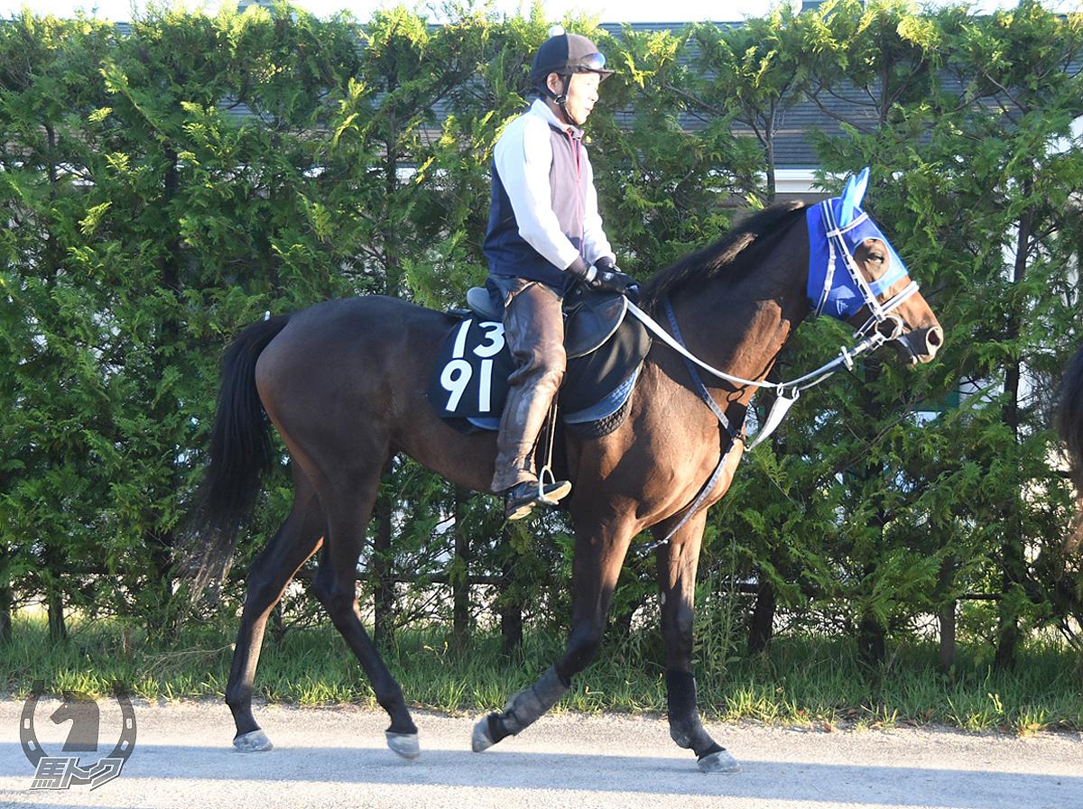 ウォーターブレイクの馬体写真