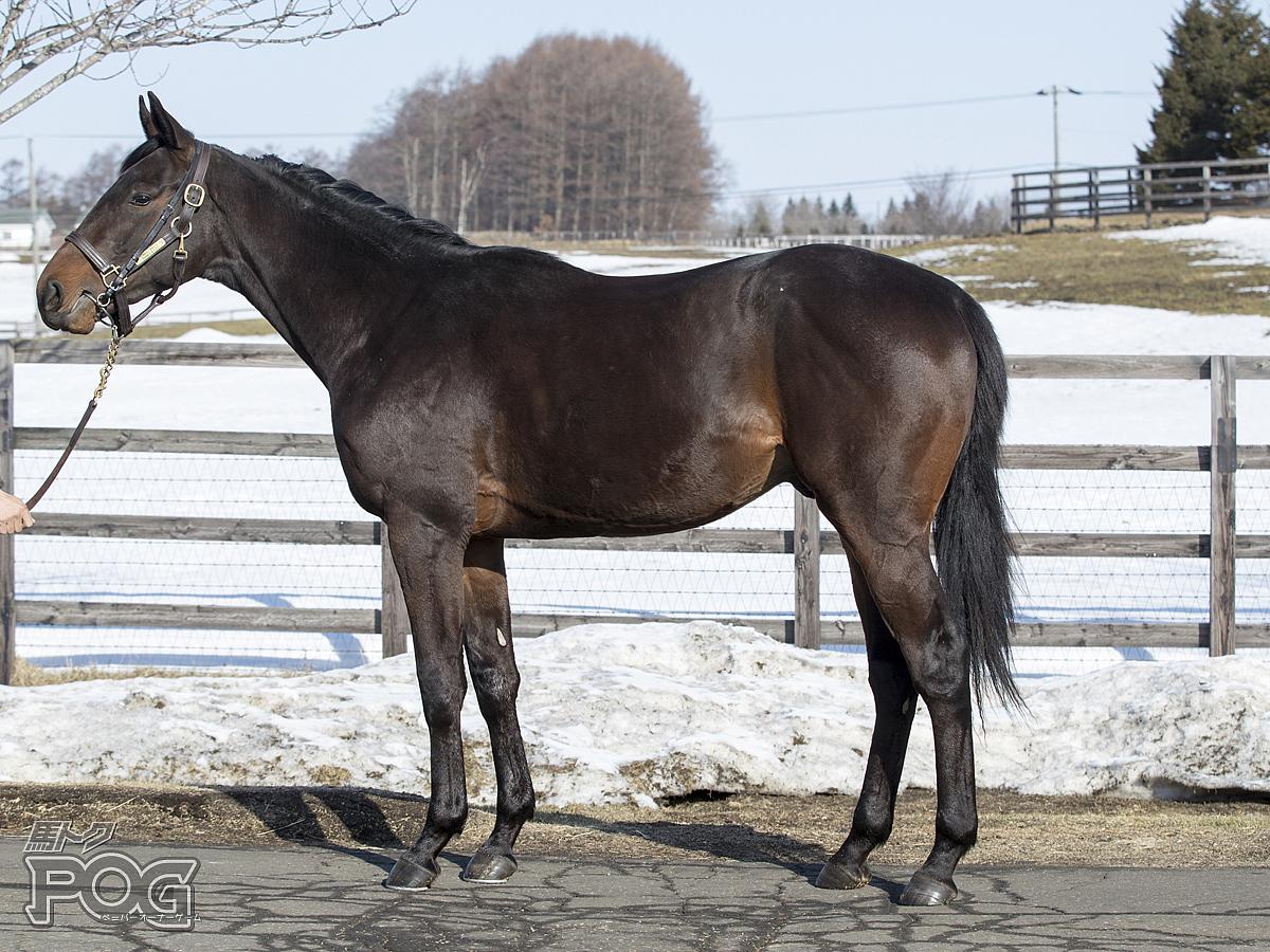 レッドグラティアスの馬体写真