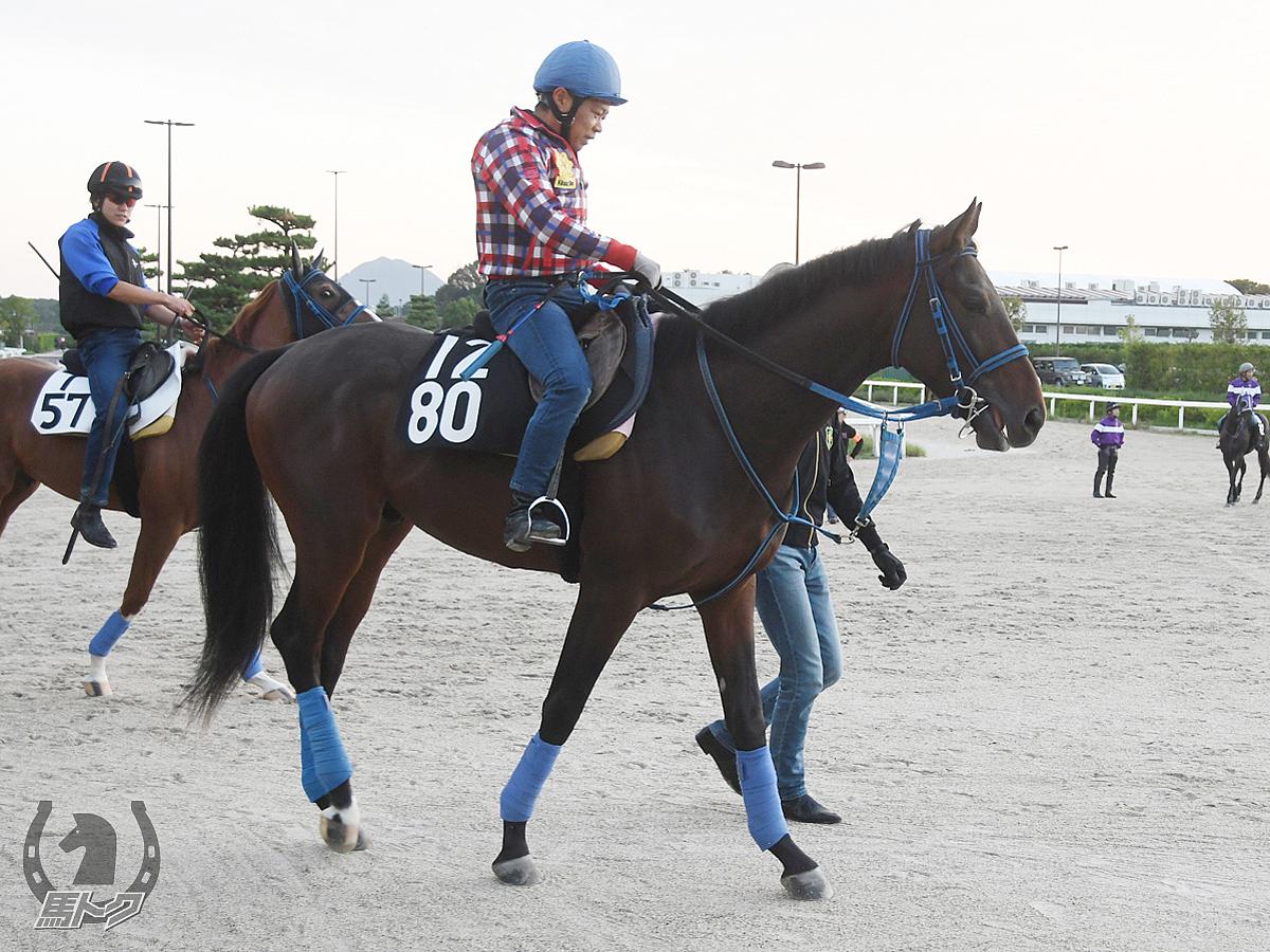 ジェレメジェバイトの馬体写真