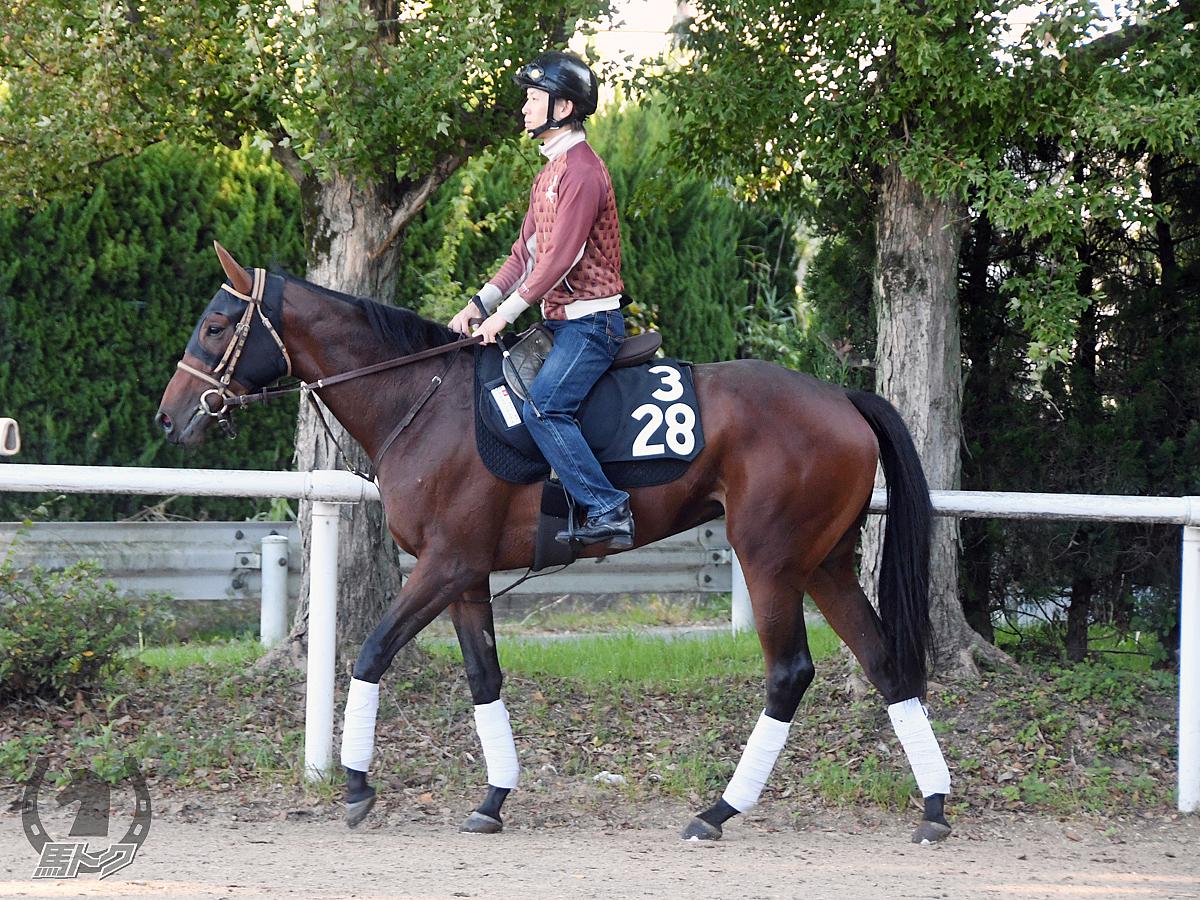 クロスペンデュラムの馬体写真