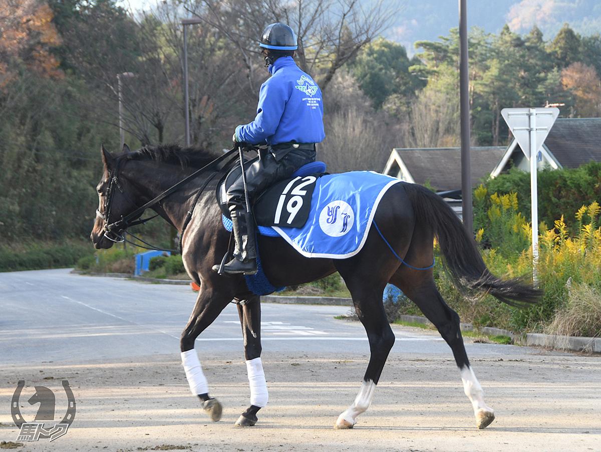 キスラーの馬体写真
