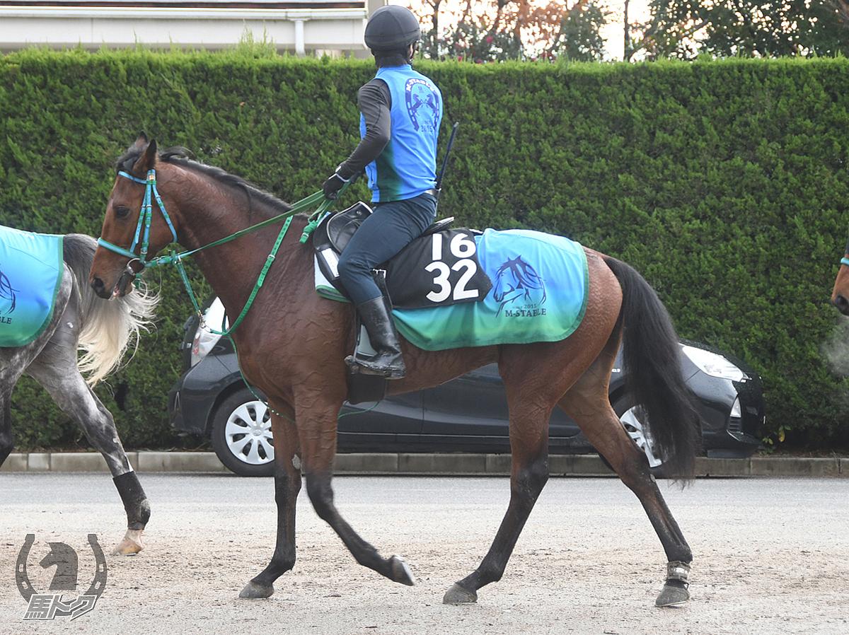 トップアスリートの馬体写真
