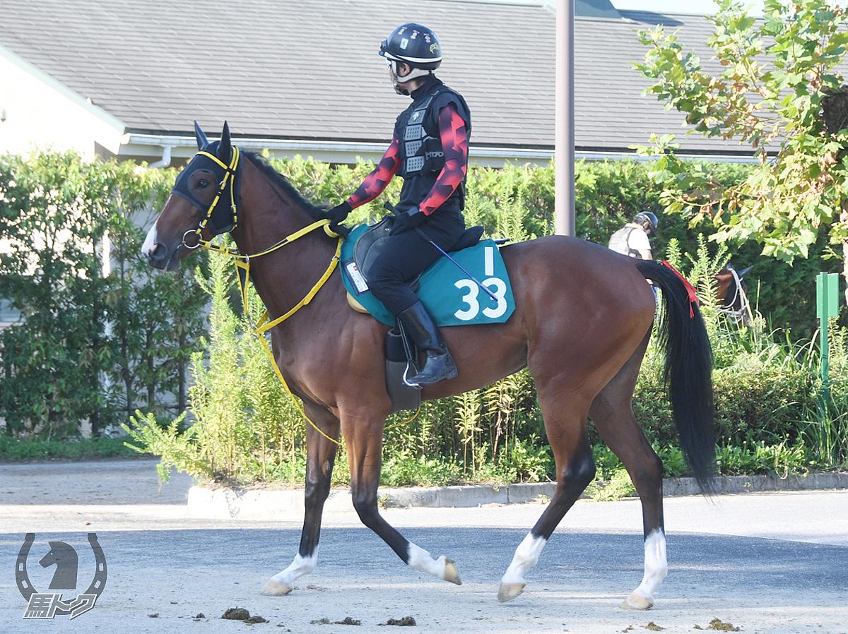 コルデトゥリーニの馬体写真