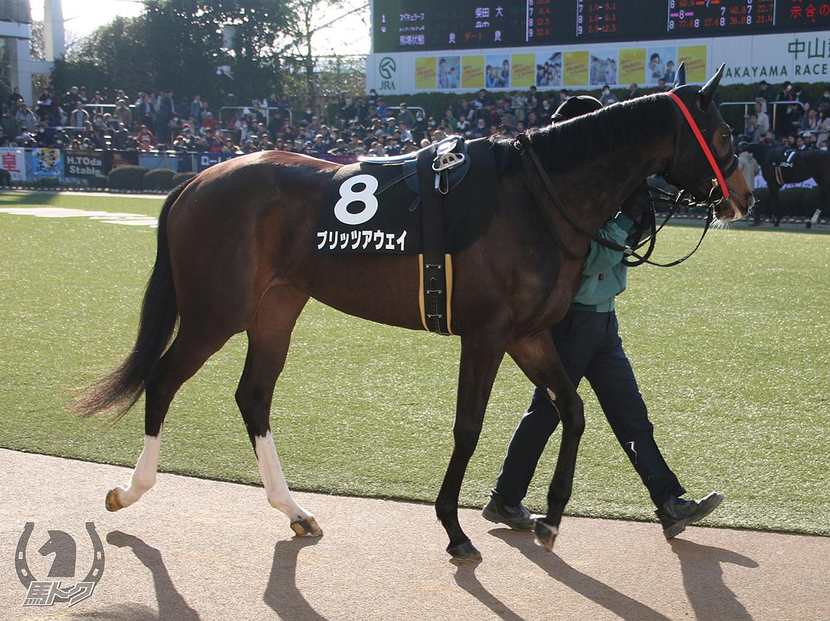 ブリッツアウェイの馬体写真