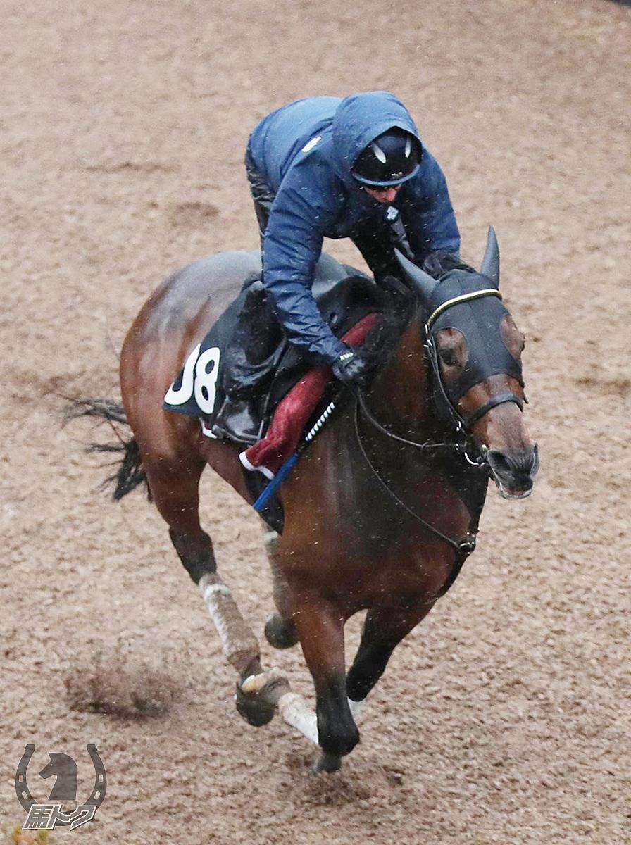 ヴァンドギャルドの馬体写真