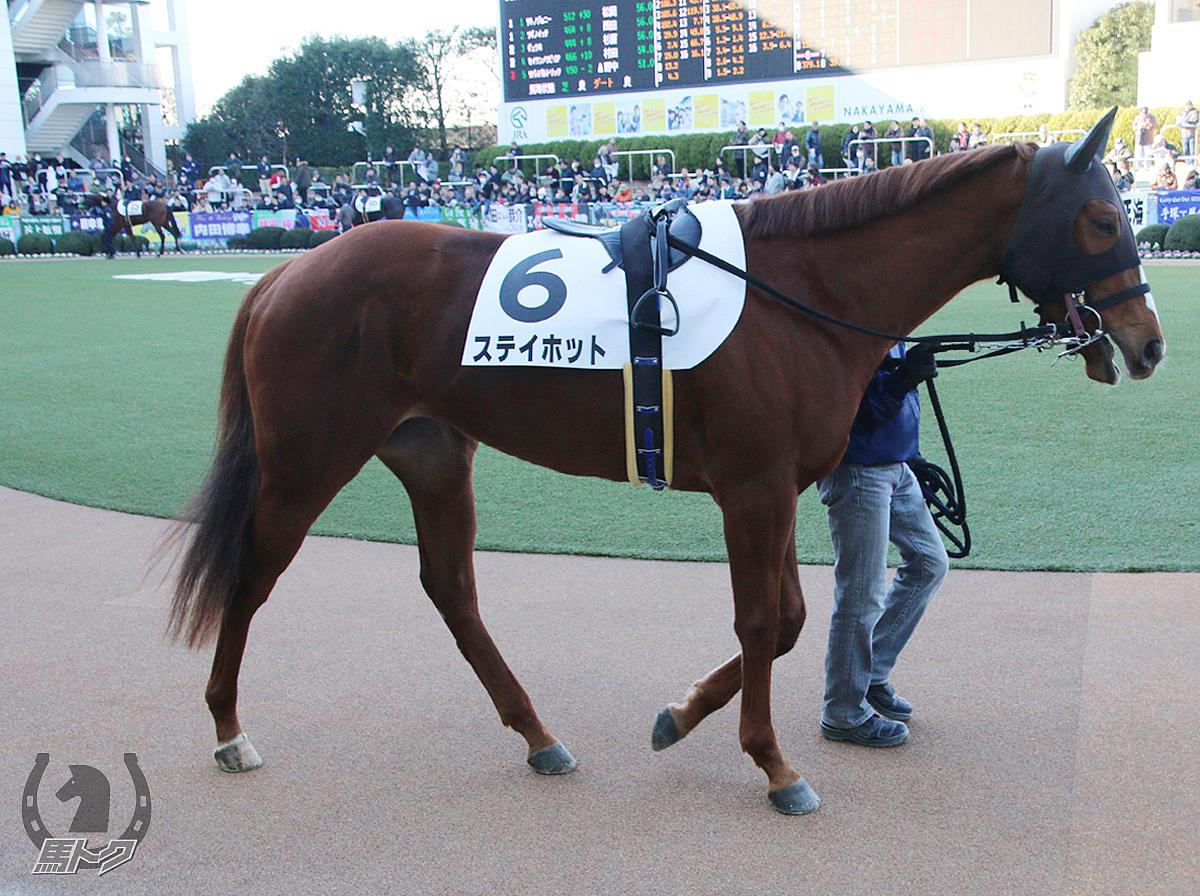 ステイホットの馬体写真