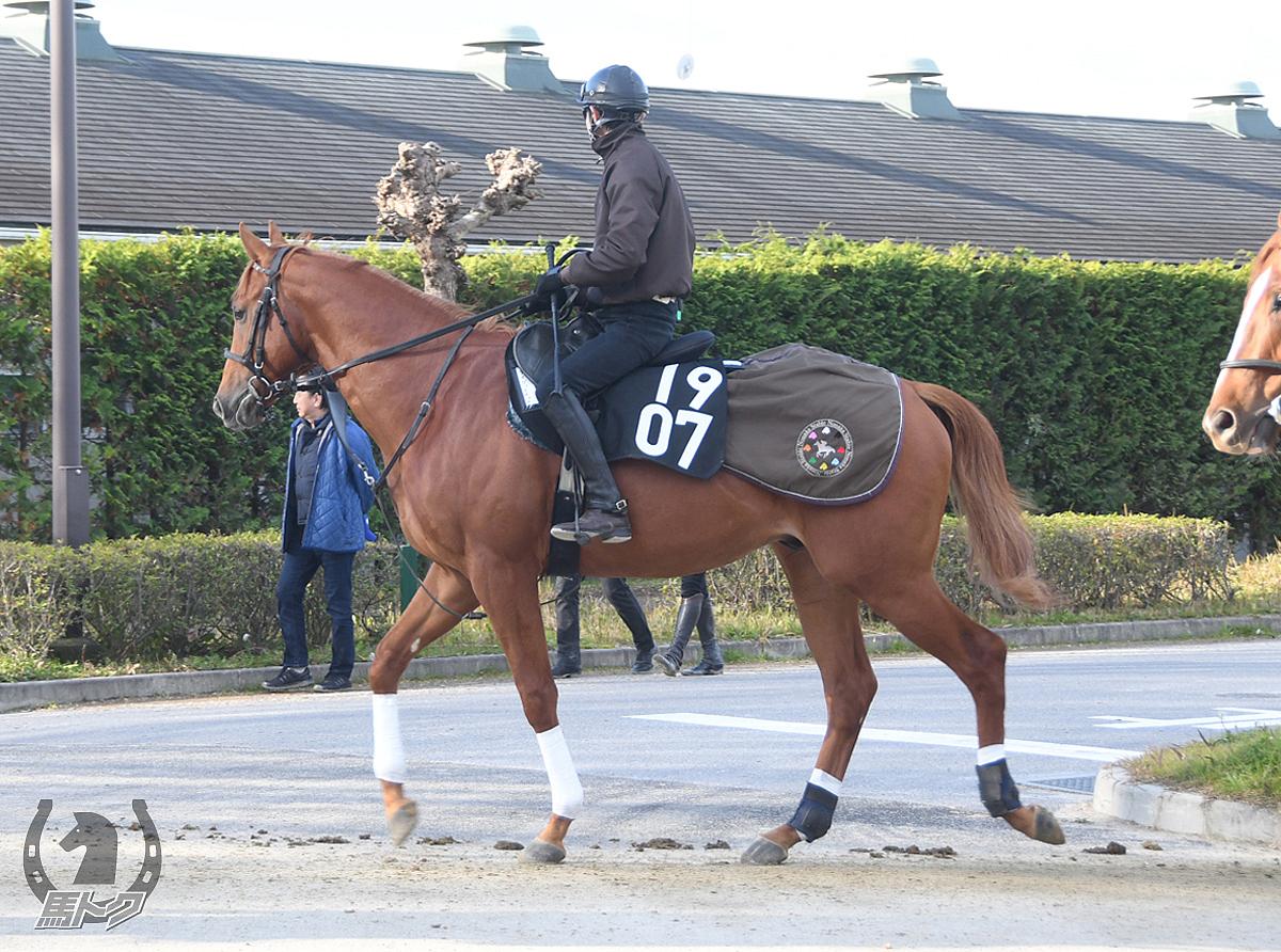 アイゴットイットの馬体写真