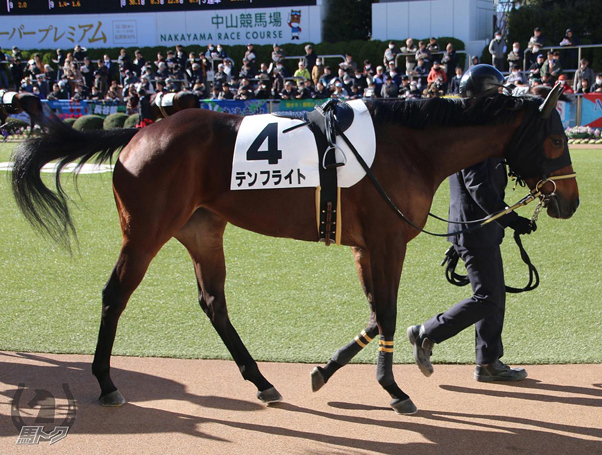 テンフライトの馬体写真