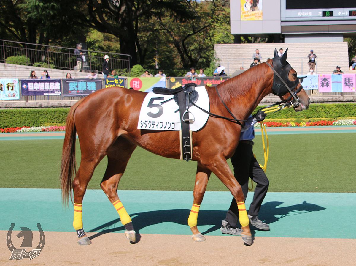 シダクティブノンコの馬体写真