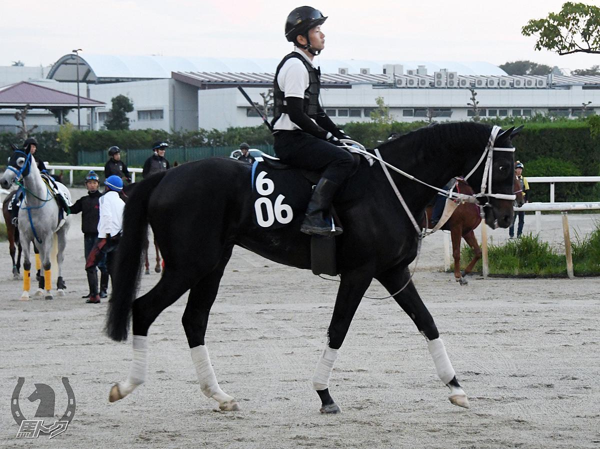 ダノンテイオーの馬体写真