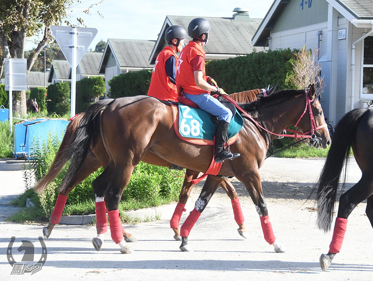 クオンタムシフトの馬体写真