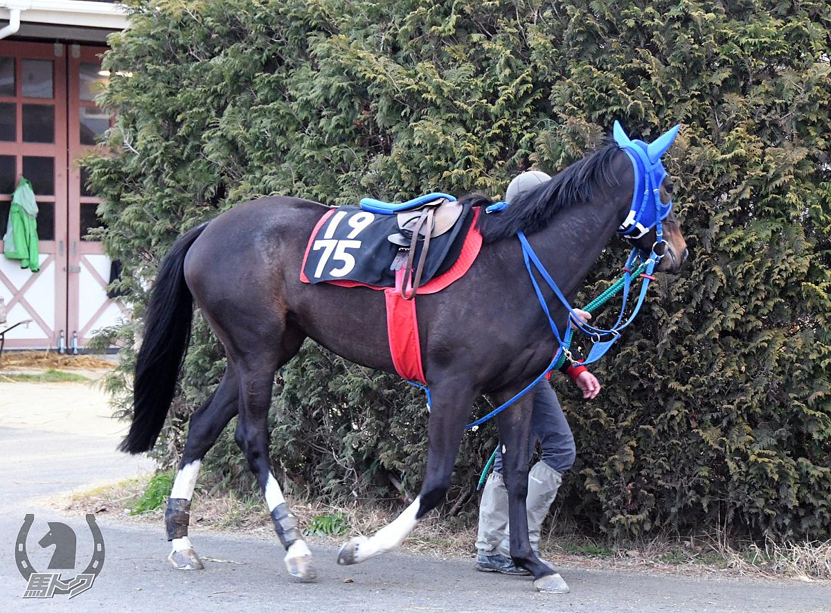 クリノシラヌイの馬体写真