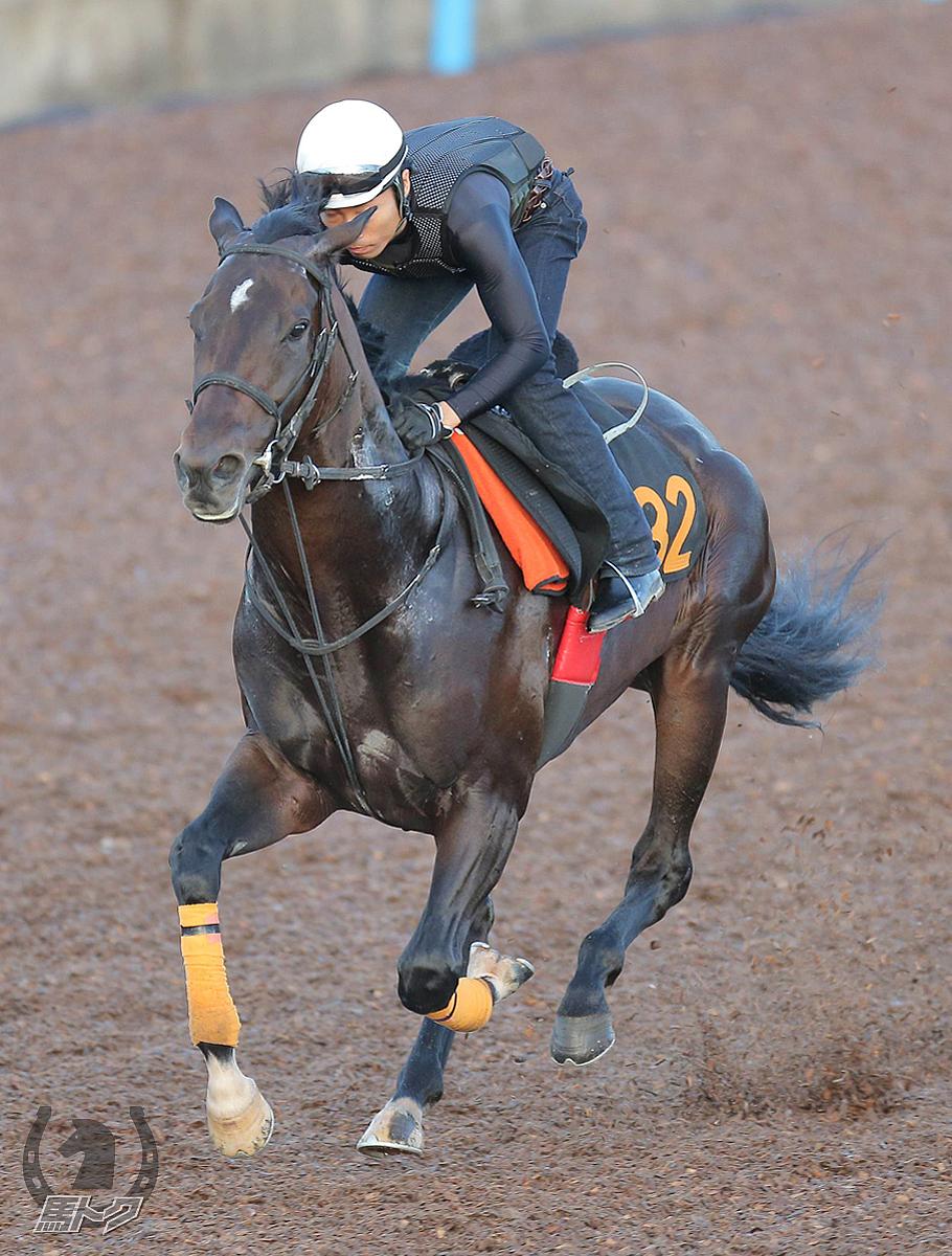 アトミックフォースの馬体写真