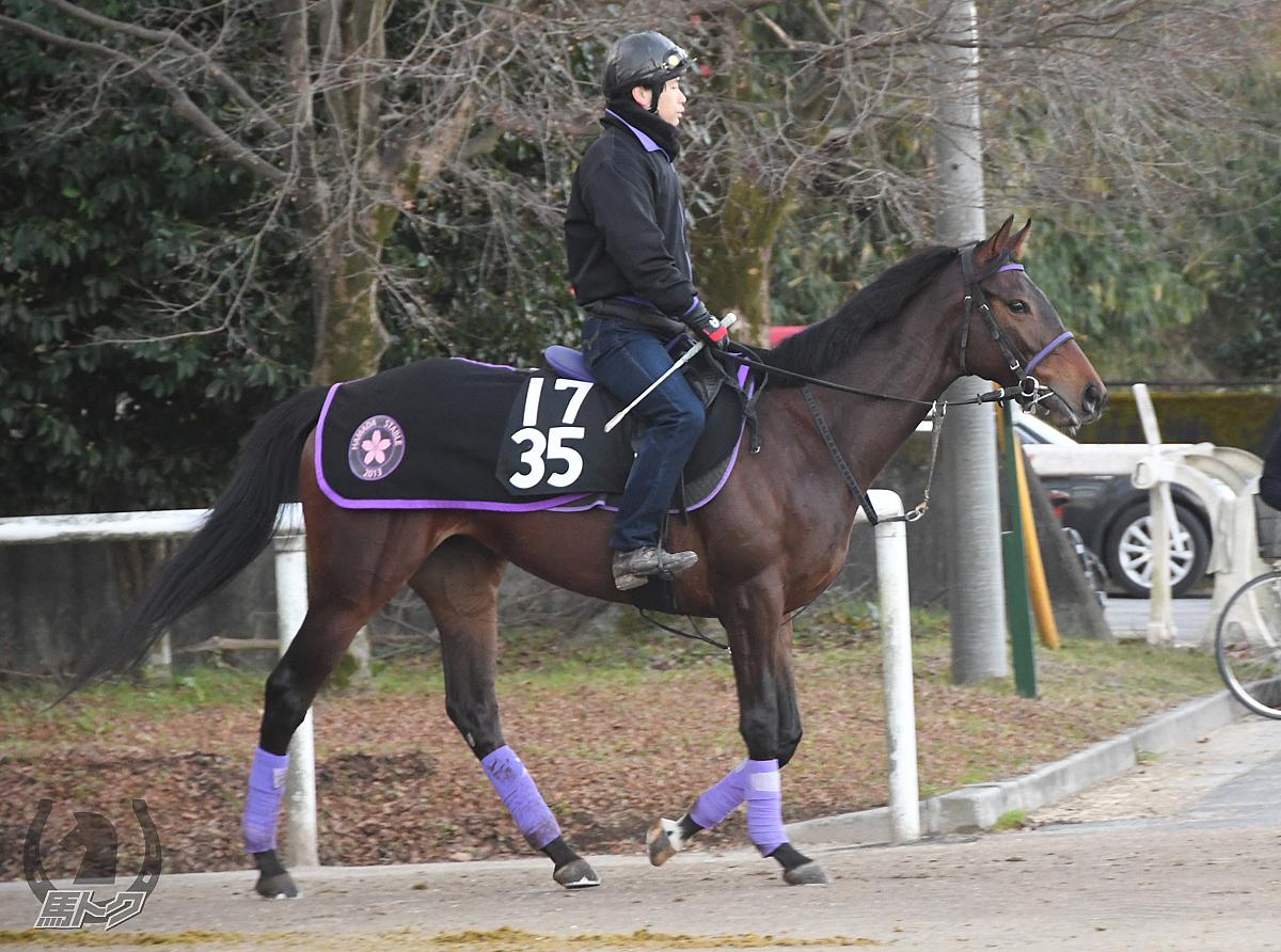 エスカルラータの馬体写真