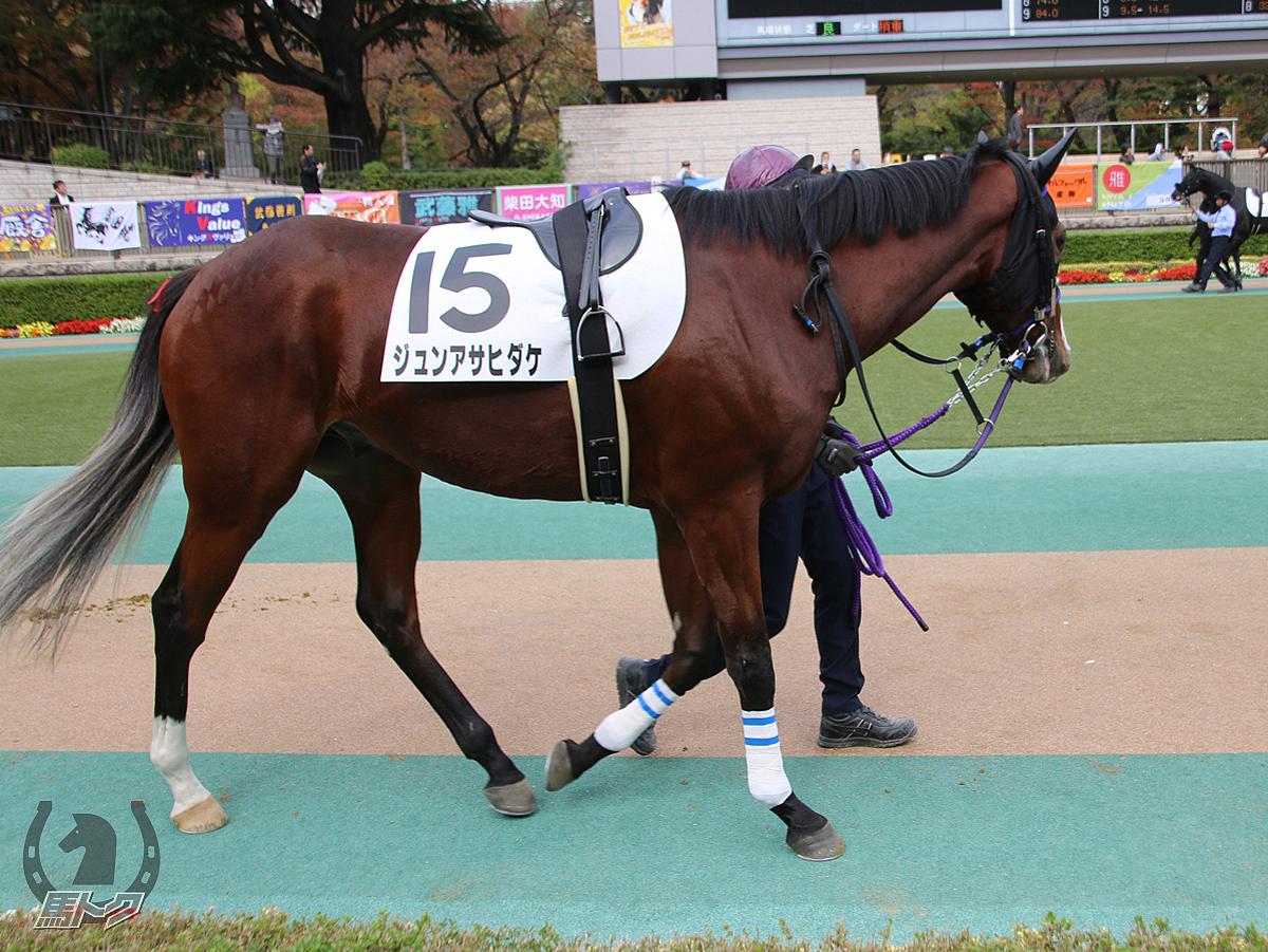 ジュンアサヒダケの馬体写真