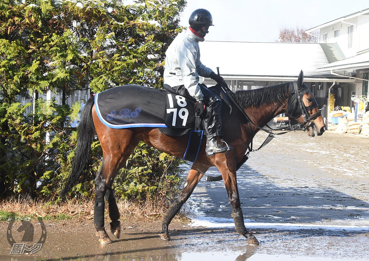 ダルトヴィラの馬体写真