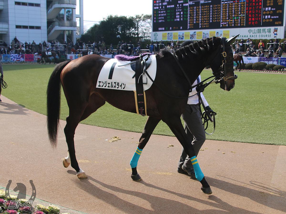 エンジェルズラインの馬体写真
