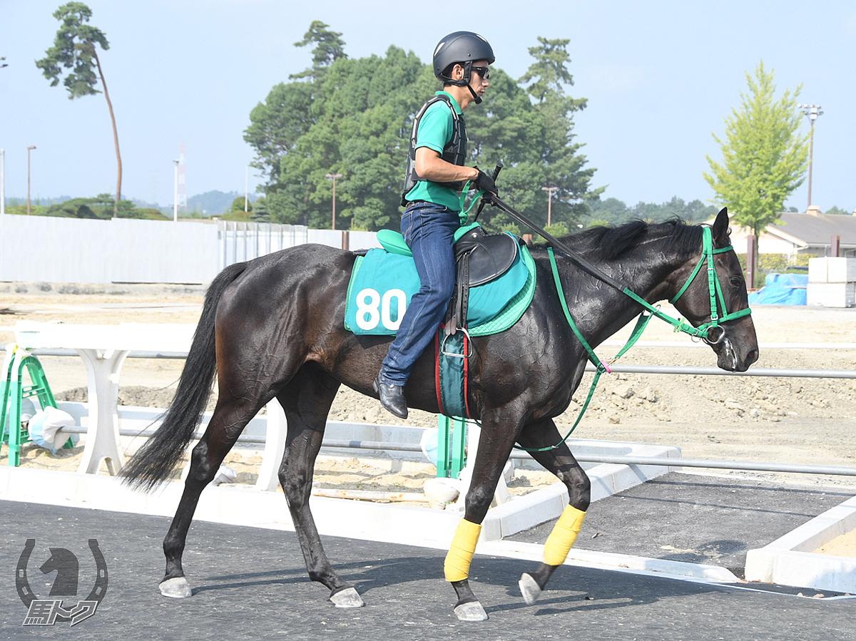 ファルトレクの馬体写真