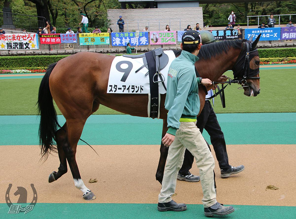 スターアイランドの馬体写真