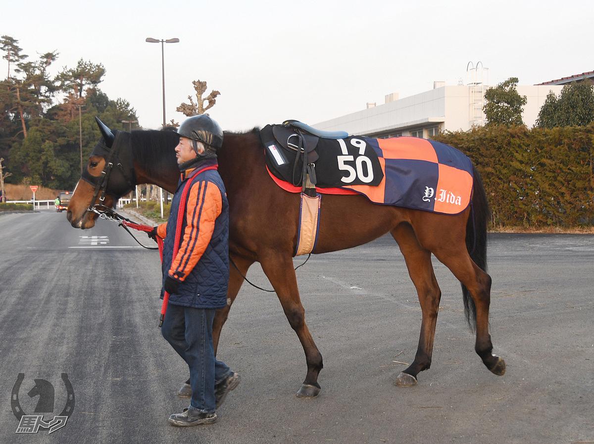 デルマディジョンの馬体写真