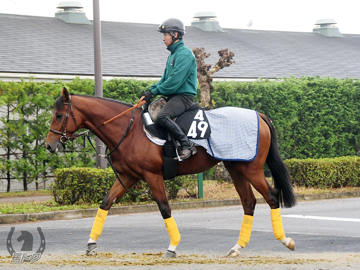 ジュベルハフィートの馬体写真