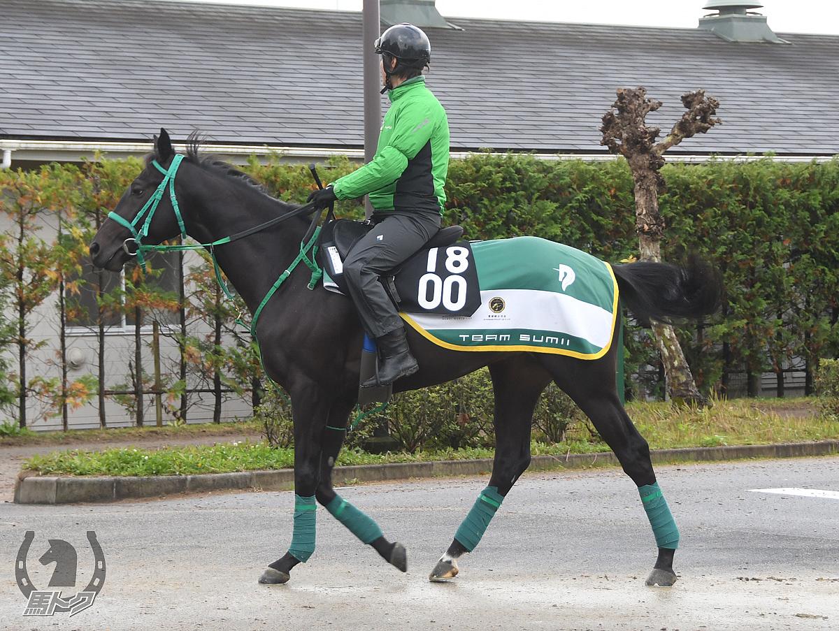 レッドレイルの馬体写真
