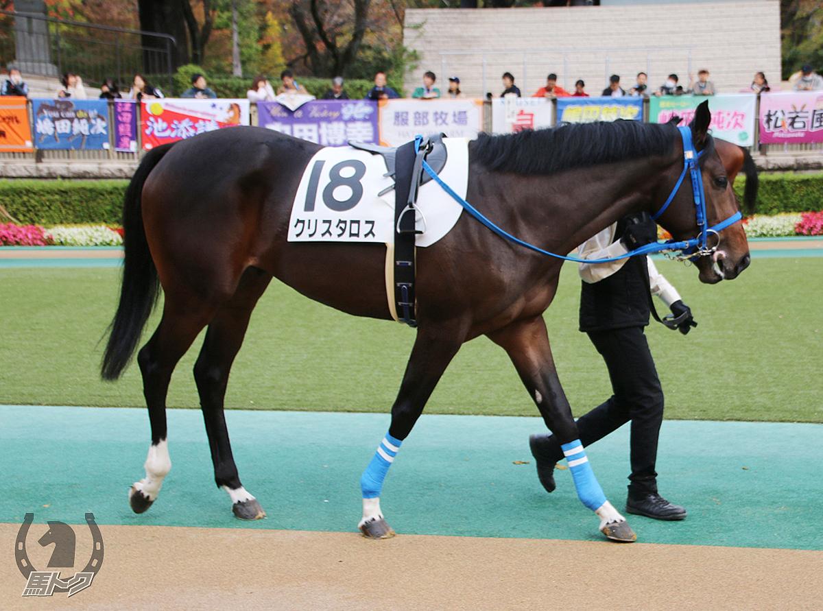 クリスタロスの馬体写真