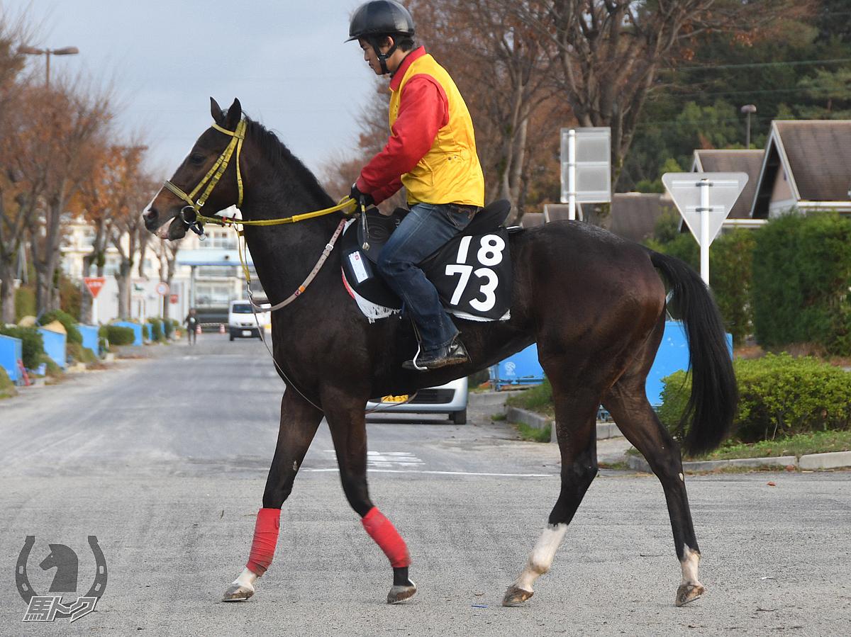 ハッシュゴーゴーの馬体写真