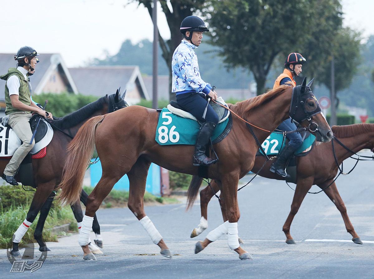 バイザディンプルの馬体写真