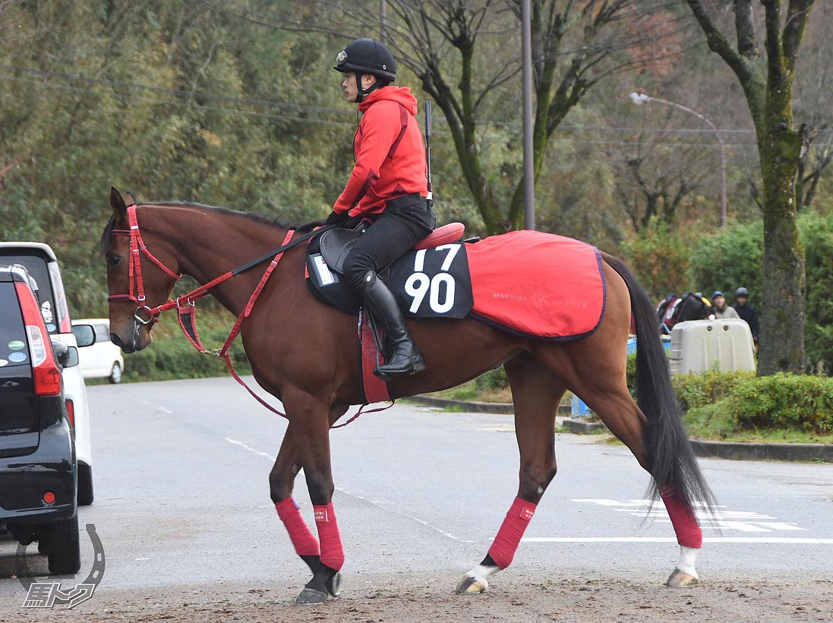 フューチャーベースの馬体写真