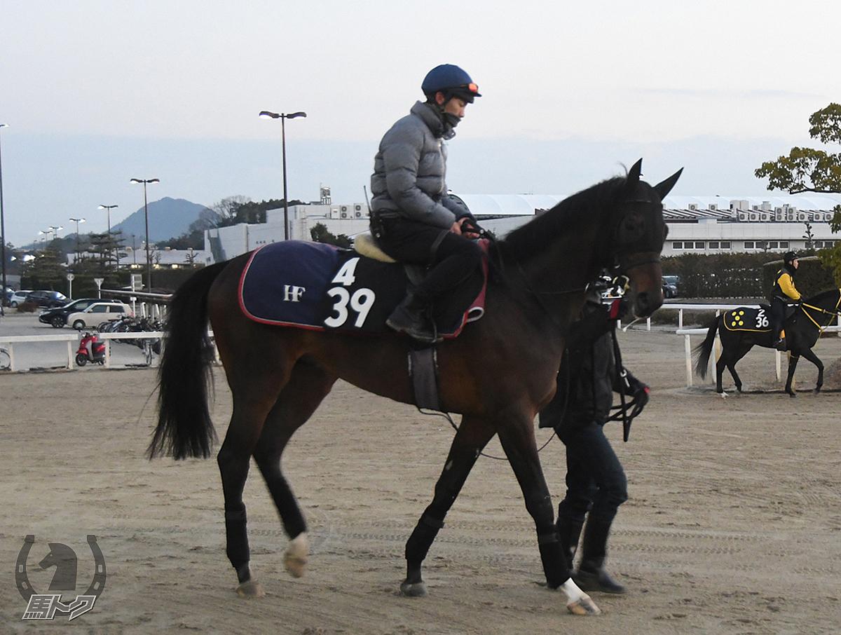 シャドウアロングの馬体写真