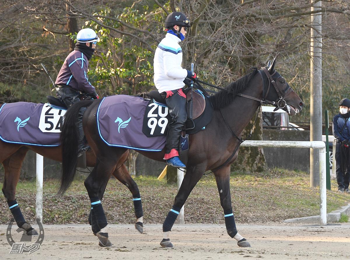 ジャストアジゴロの馬体写真