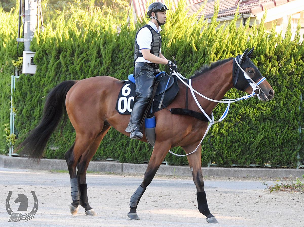 ダノングリスターの馬体写真