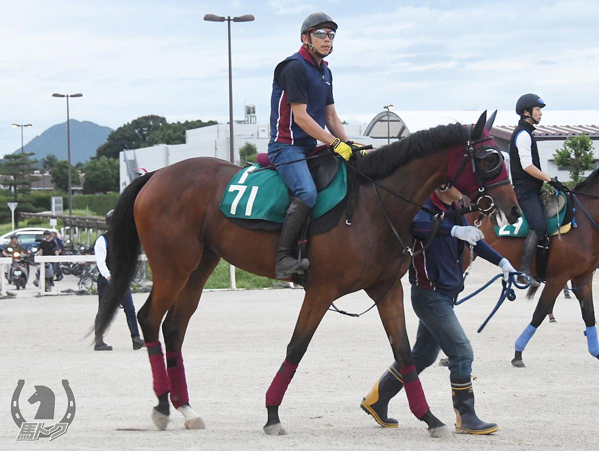ファビュラスギフトの馬体写真