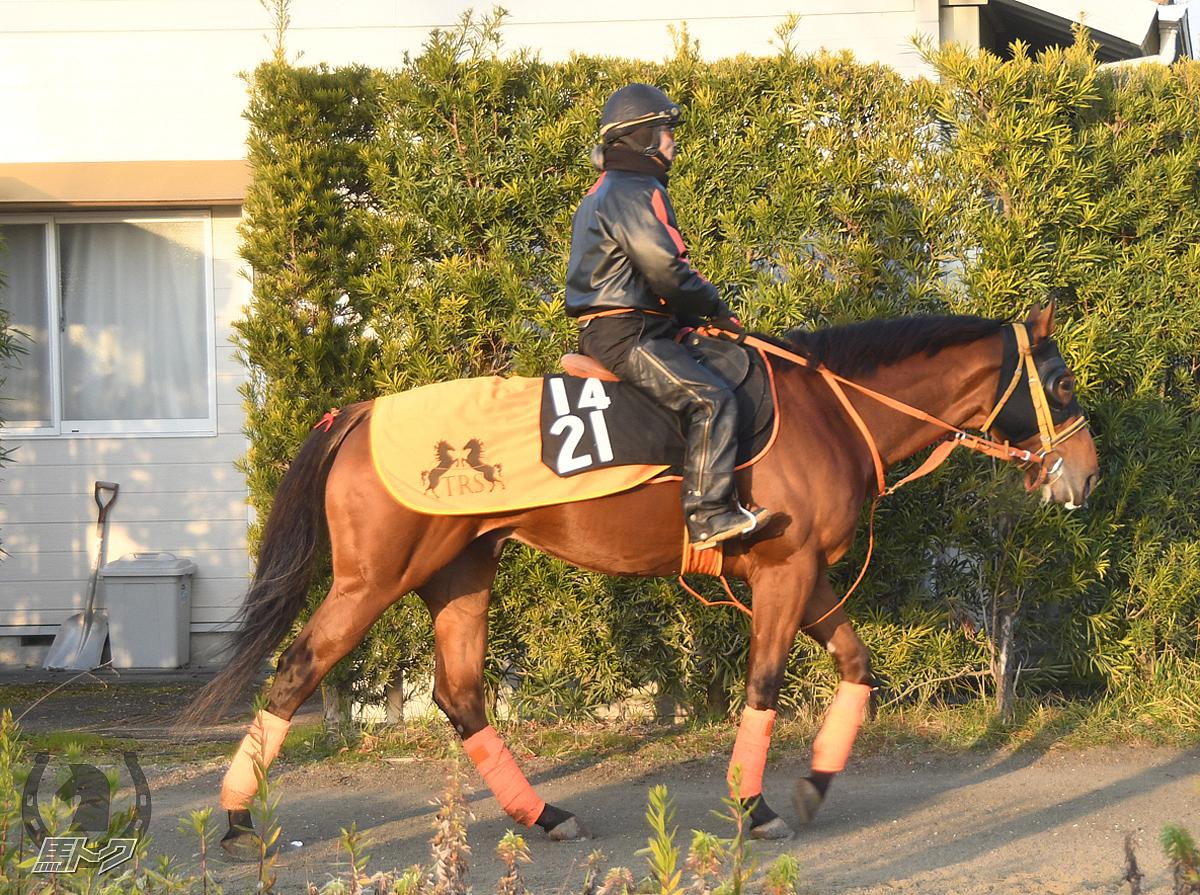 タイセイミストラルの馬体写真
