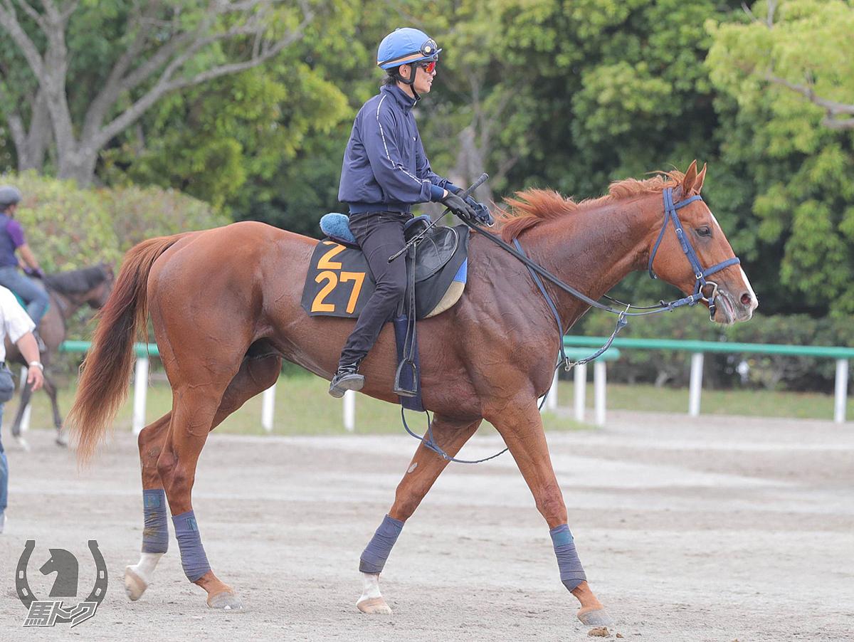 オンザウェイの馬体写真