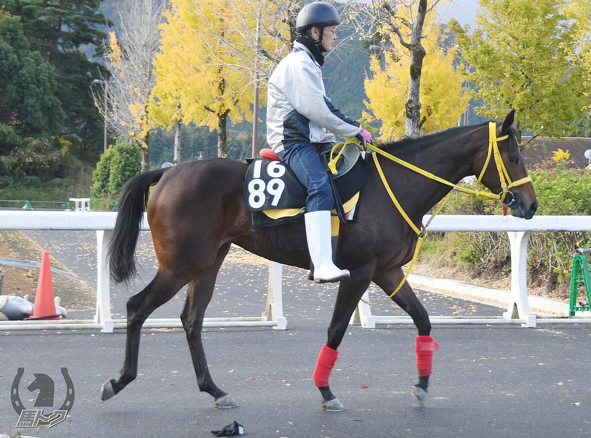 フェータルイヴの馬体写真