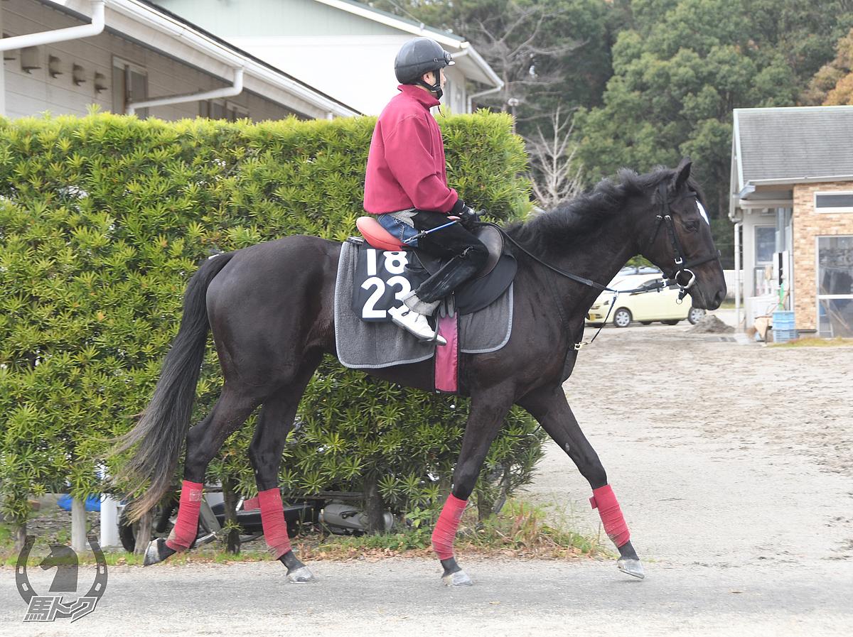 アルマンドの馬体写真