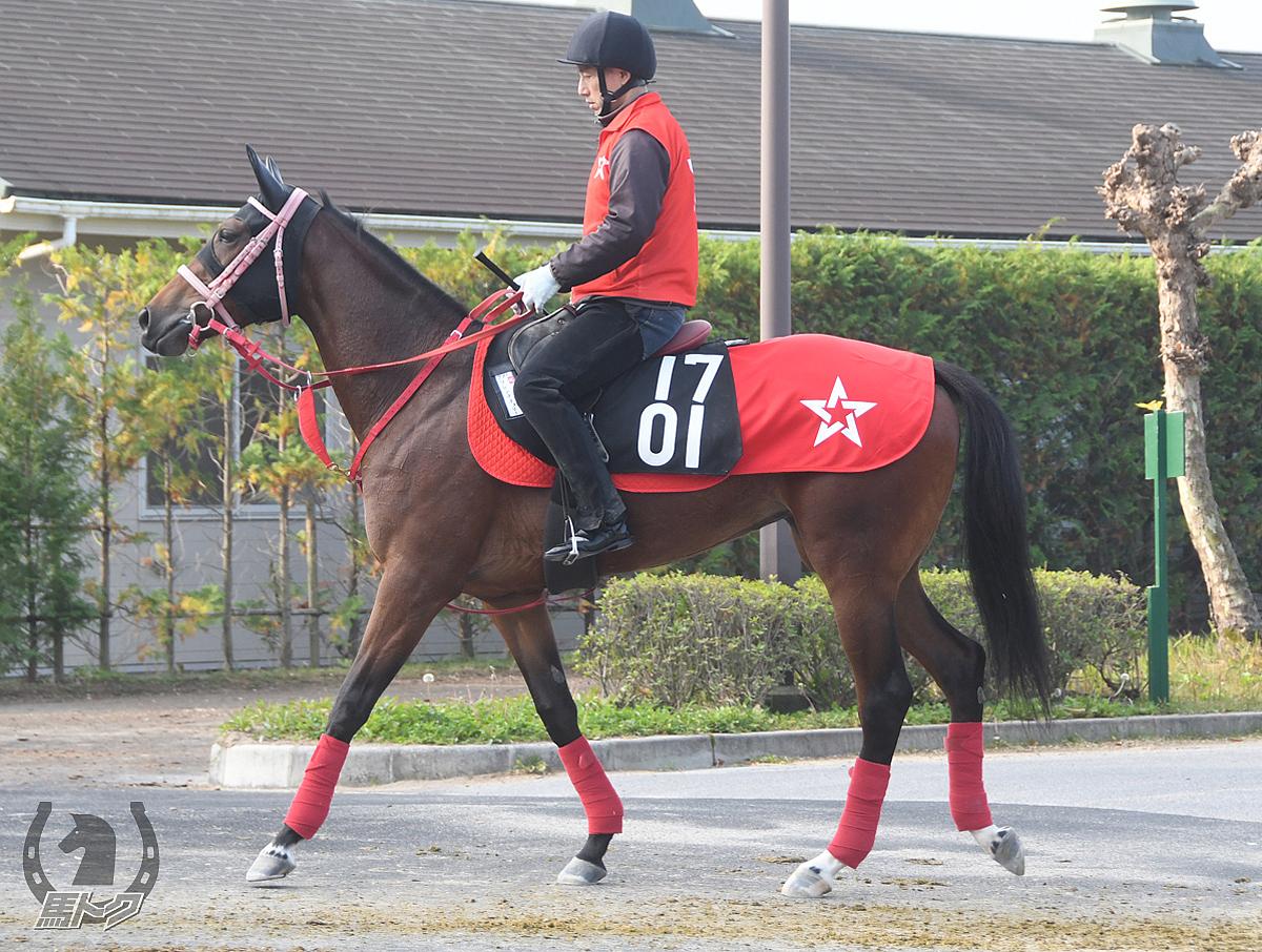 フレンチチェリーの馬体写真