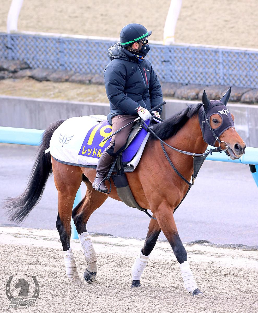 レッドルゼルの馬体写真