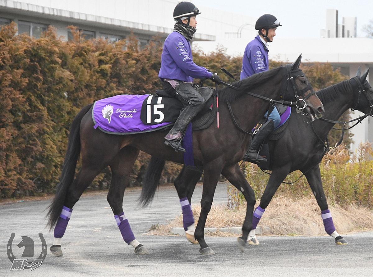 ランブリングアレーの馬体写真