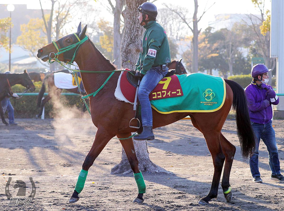 ココフィーユの馬体写真