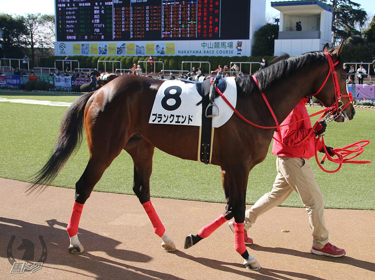 ブランクエンドの馬体写真