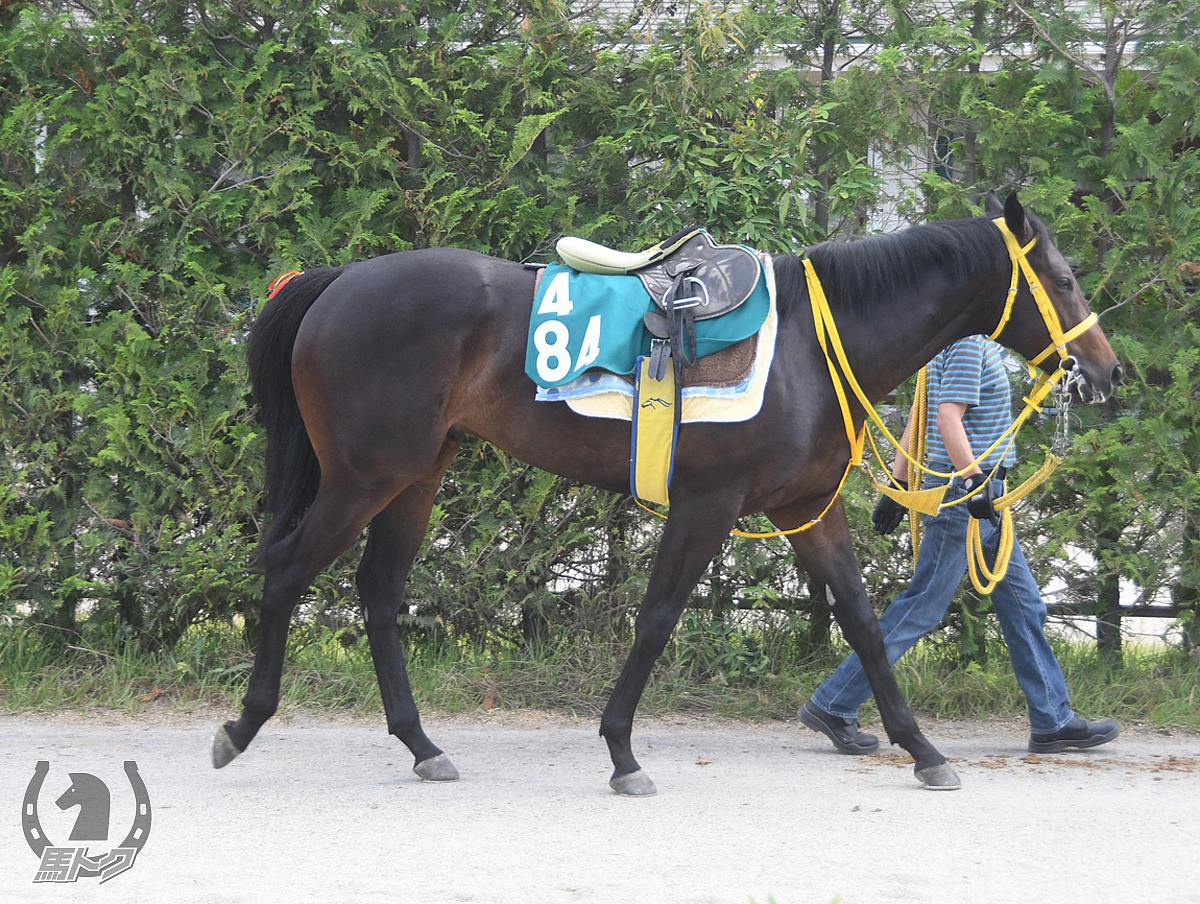 フゼアノートの馬体写真